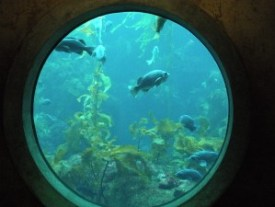 portal to the ocean