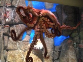 un-named octopus