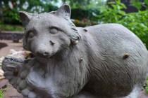 Raccoon Warts