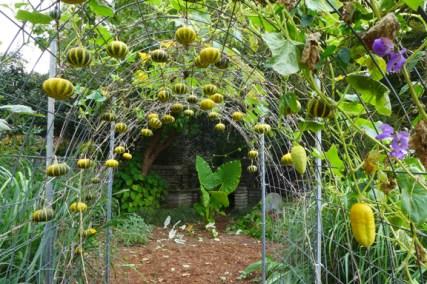 gourd tunnel