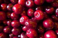 cherries so fresh they haven't lost their shine