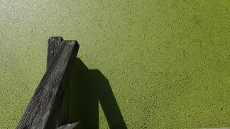 duckweed and wood