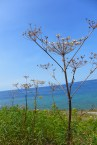 seed pods and the bay