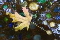 first leaf in the birdbath