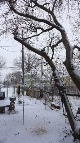 side yard and magnolia