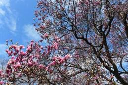 magnolia 09