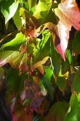 more garage leaves