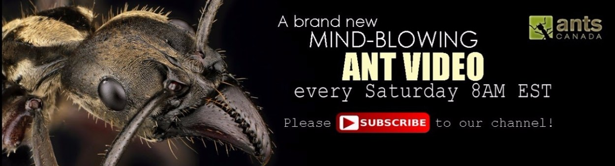 youtube review antscanada squirtingsquid
