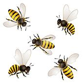 killer bee clip art and stock illustrations