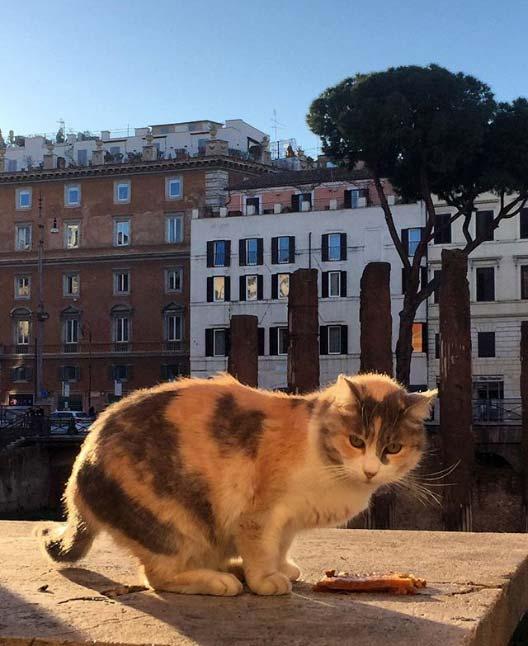 @Mariucciad su Instagram racconta la bellezza di Roma