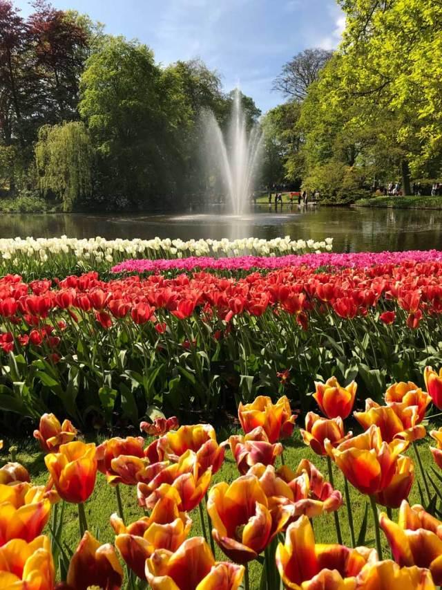 A Parco Keukenhof in Olanda ci sono tulipani di ogni colore e specie!