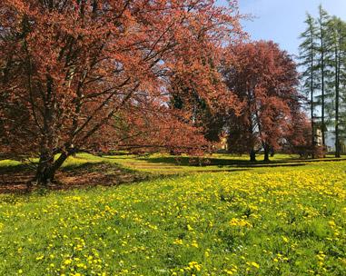 Cosa vedere in Valsugana? Il Parco delle Terme di Levico coi suoi colori