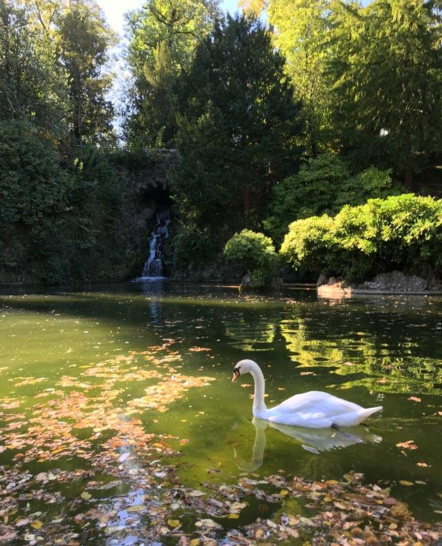 I Giardini Estensi hanno una parte in stile romantico, con colline boscose e un lago dei cigni