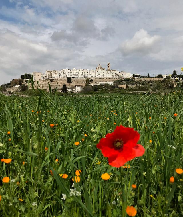 Cosa vedere in Valle d'Itria in primavera? Due dei borghi più belli d'Italia: Cisternino e Locorotondo