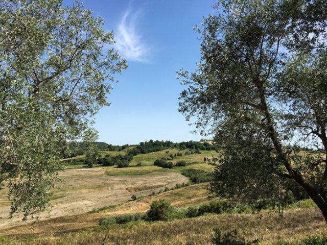 Le Crete Senesi sono un paesaggio naturale di colline argillose nei dintorni di Siena