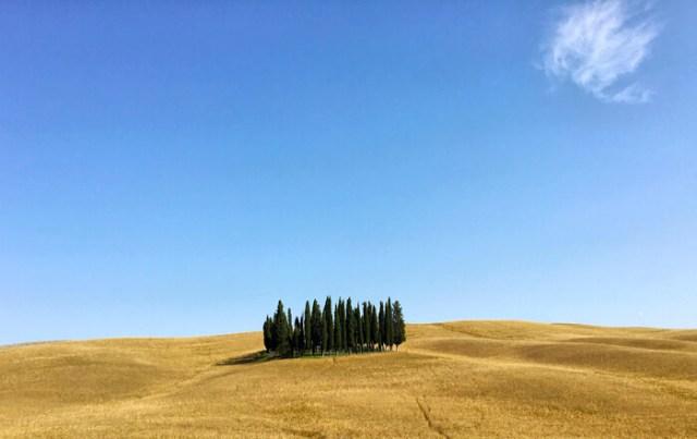 i-cipressi-di-san-quirico-dorcia-sulle-colline-tonde-dorate-e-cielo-azzurro-simbolo-della-val-dorcia-in-toscana