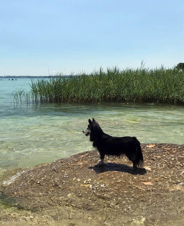 Il Lido delle Bionde è una delle spiagge più belle di Sirmione: è anche per cani