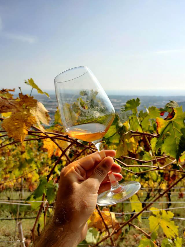Degustazione tra le vigne del vino di Candia dei Colli Apuani DOC