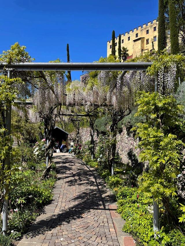 Anche il glicine in fiore c'è nei giardini di Sissi a Merano