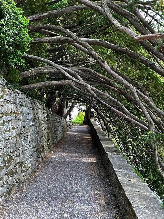 Il giardino di Villa Pizzo a Cernobbio ha una galleria di tassi