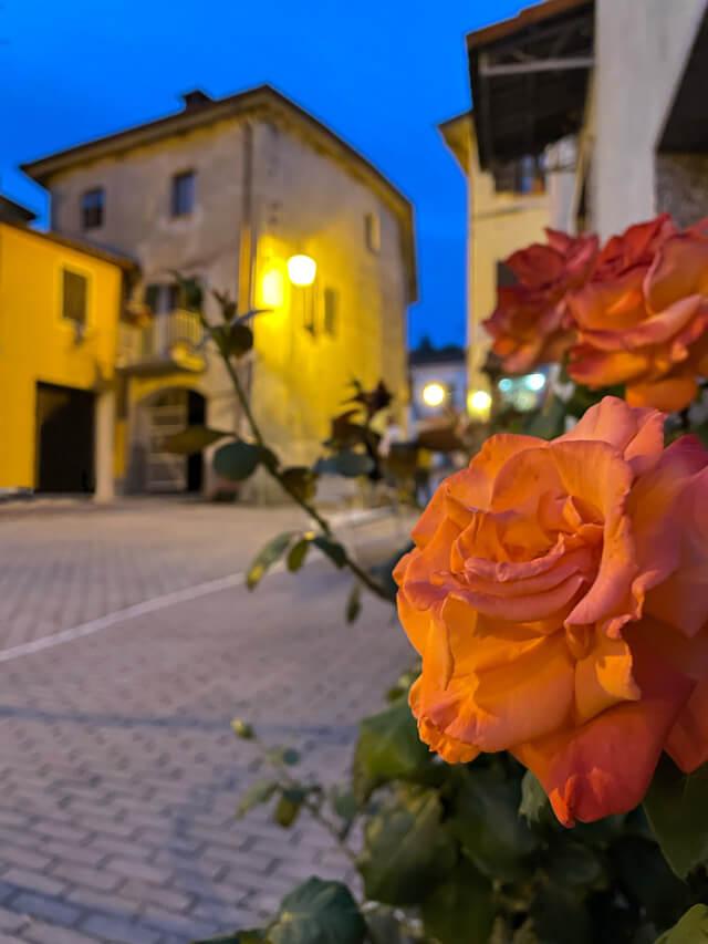 Ora blu a Castelnuovo di Ceva con rosa in primo piano