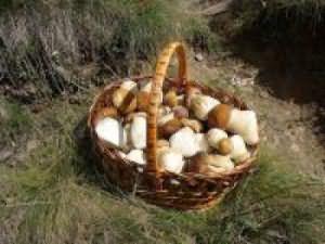 Complimente și premii pentru pierderea în greutate - Bezzeganya