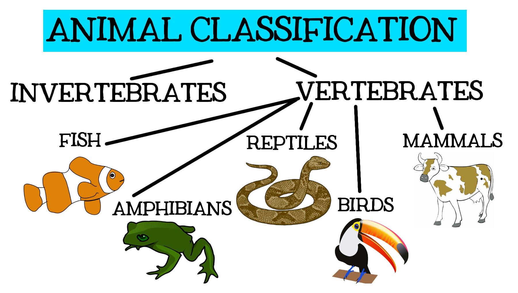Classification Of Bones Worksheet