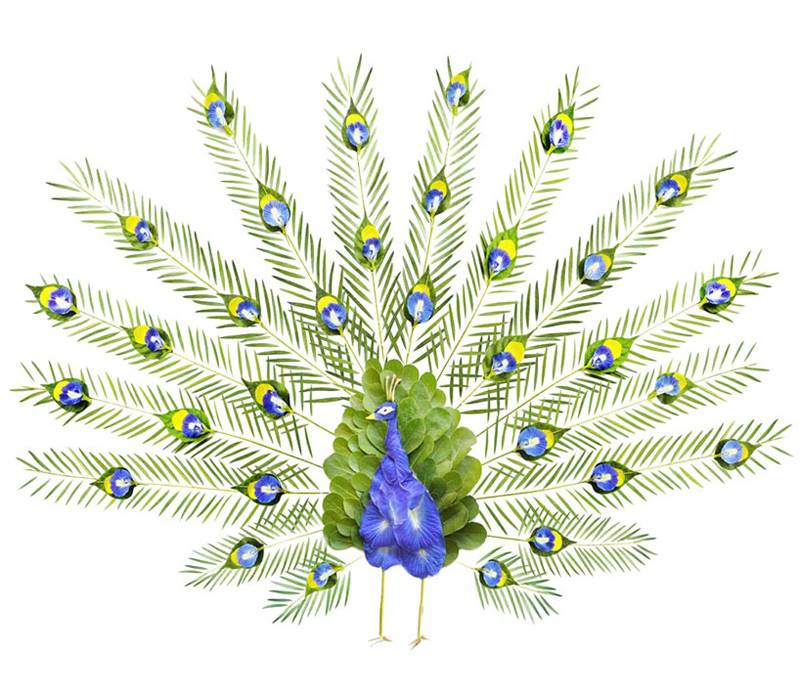 Peacock - Facebook Featured Photos for your Profile