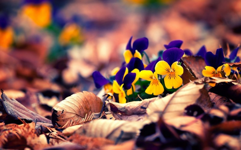 25+ refreshing nature wallpapers Download for your Smartphone 21