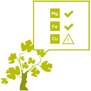 Conseil agro-œnologique