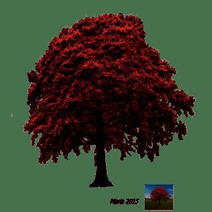 Tree Png For Picsart