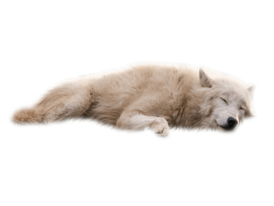 Animals png HD