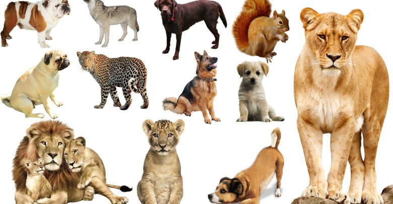 Animals Png