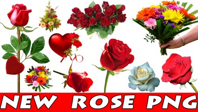 Photo of Rose Png HD New Collection For Picsart and Photoshop Editing 2018