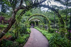 Singapore Botanical Gardens - sree is travelling (18)