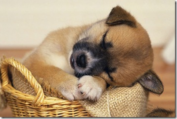 puppies08