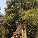 www.sreep.com 20180214_100511217159180 Cambodia: Tempelanlage Ankor Wat - Kambodschas Wahrzeichen