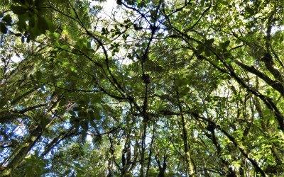 Sortie Nature – Découverte des fougères à la Plaine des Palmistes