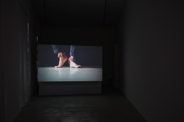 Rosa Rosae (collaboration with Kuldeep Singh), 2017, Installation View