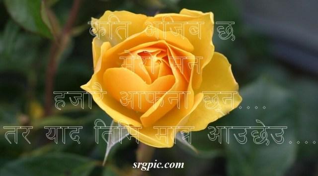 flower-roses-bloom-blossom-love-shayari