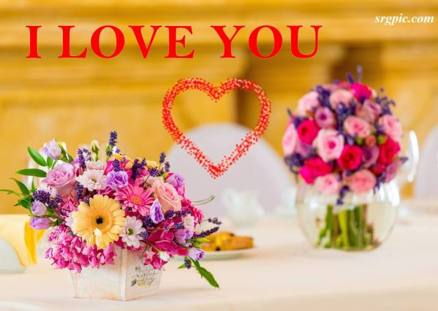 whatsapp-dp-image-assorted-color-flowers