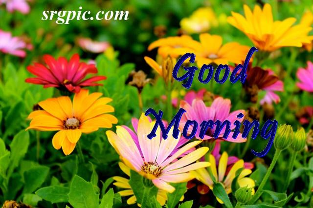 beautiful-positive-morning-quotes