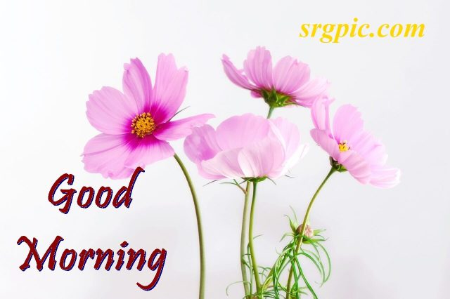 nature-positive-morning-quotes