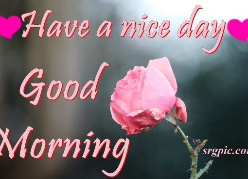 have-a-nice-day-wishes-with-rose