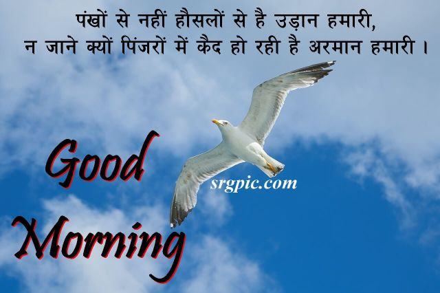 love-birds-good-morning-images-5
