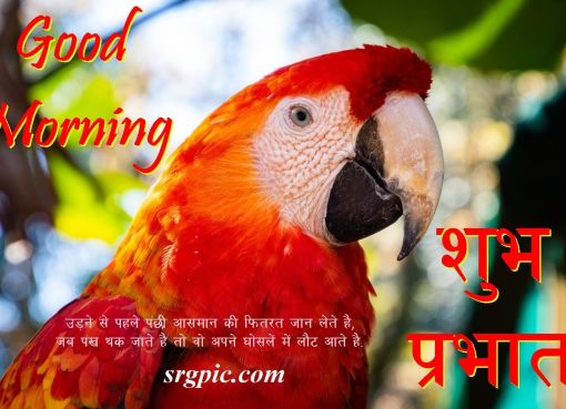 love-birds-good-morning-images-8