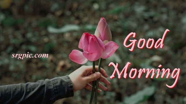 rose-on-hand-wishing-goodmorning