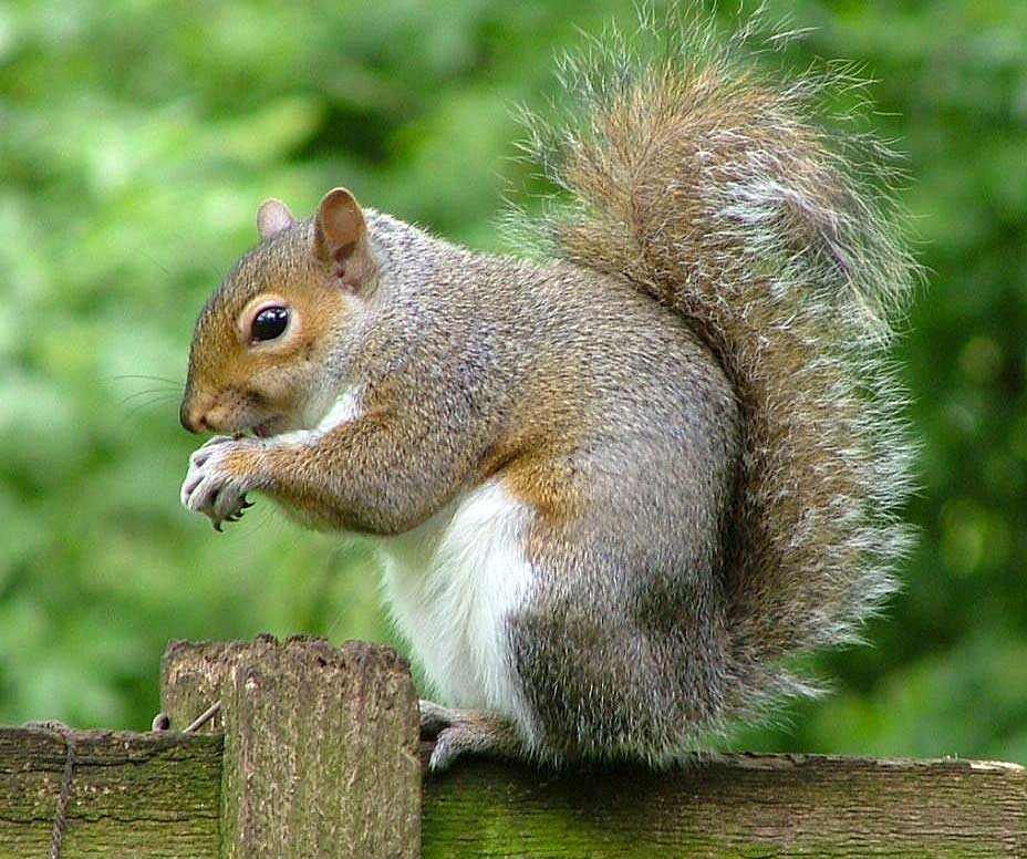 animal kingdom 48 squirrel