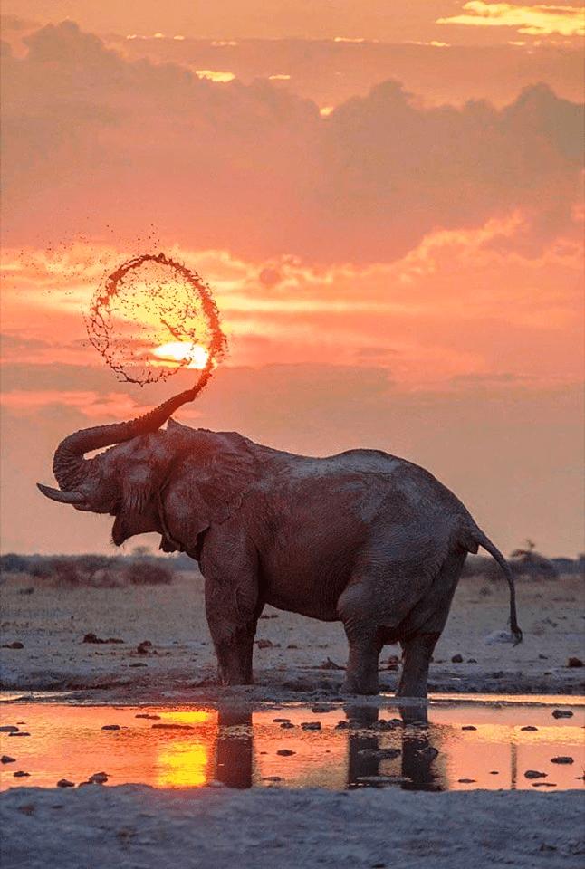 sri lanka elephants 1