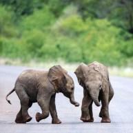 sri lanka elephants 2